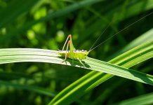 Žuželke za hrano